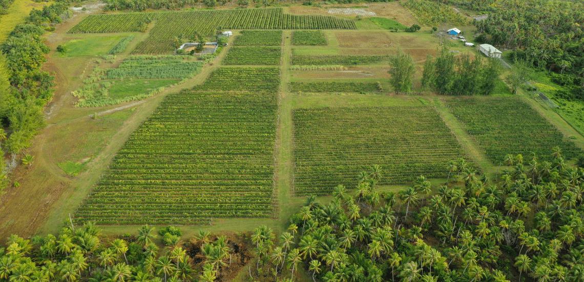 https://tahititourisme.cl/wp-content/uploads/2017/08/Vin-de-Tahiti_1140x550-min.png