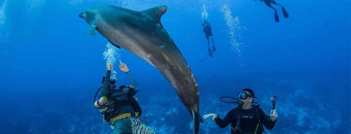 https://tahititourisme.cl/wp-content/uploads/2017/10/Rangiroa-Diving-Center-1150x440px.jpg