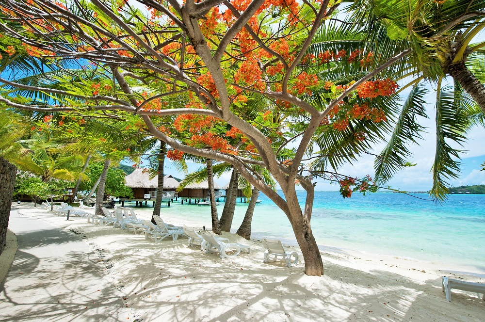 https://tahititourisme.cl/wp-content/uploads/2020/01/BOB-Maitai-Bora-Beach.jpg