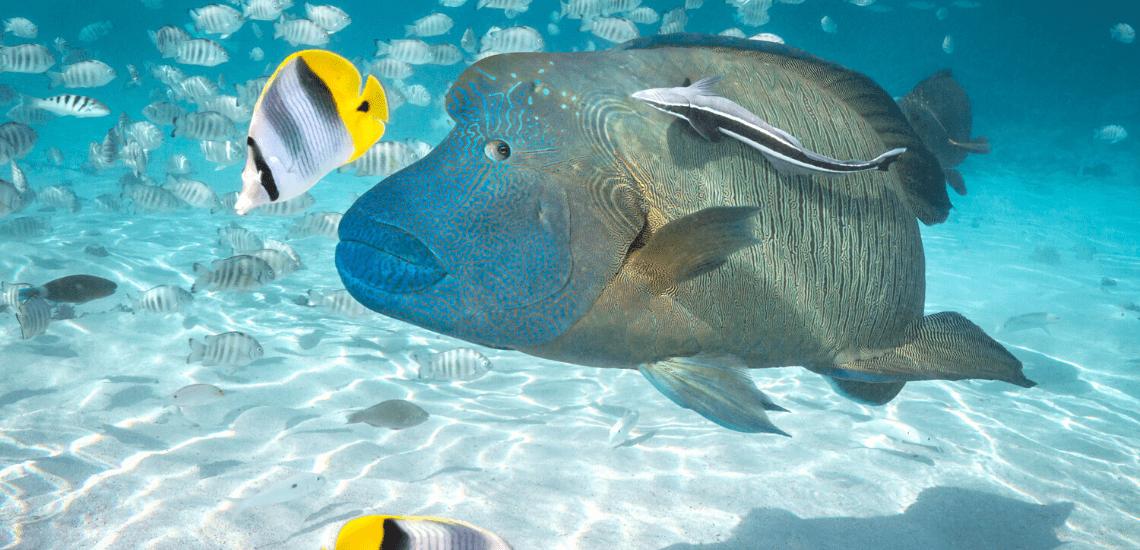 https://tahititourisme.cl/wp-content/uploads/2020/02/SnorkelingExpeditions2_1140x550-min.png