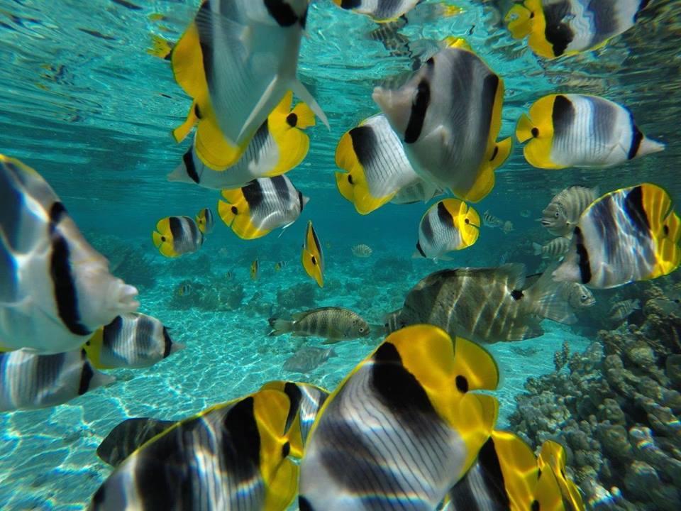https://tahititourisme.cl/wp-content/uploads/2020/06/jardin-corail-tahaa-5.jpg