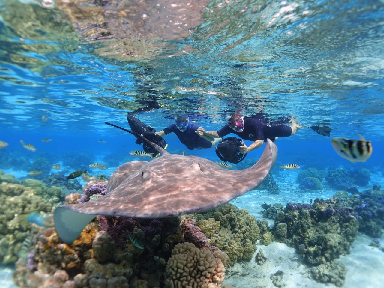 https://tahititourisme.cl/wp-content/uploads/2020/09/Sea-Scooter-Snorkeling-Tour-à-moorea-copie-2.jpg