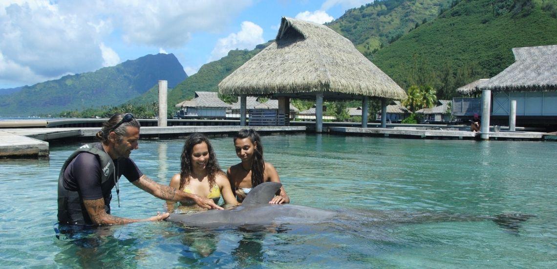 https://tahititourisme.cl/wp-content/uploads/2021/01/Offre_Moorea-Dolphin-Center.jpg